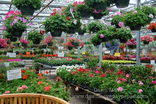 This Is In The Indoor Part Of Nursery Lots More Tables Full Bedding Plants And Hanging Above Sigh So Pretty