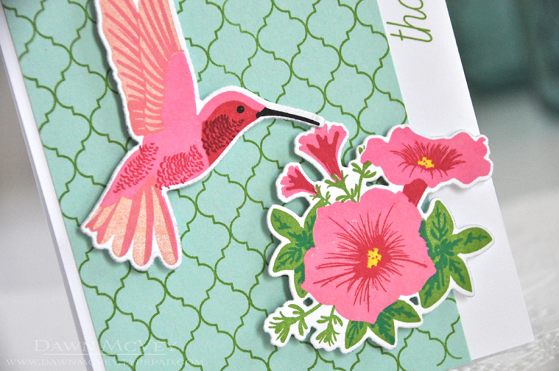CoverUpQ-hummingbird3