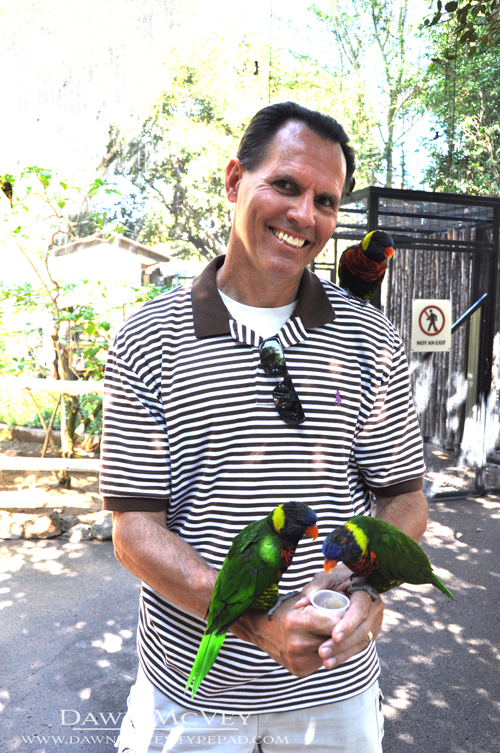 Bart and the Lorikeets